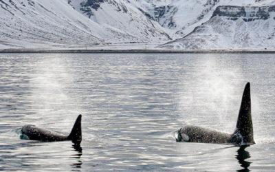 Les menaces pesant sur l'Arctique et sa biodiversité